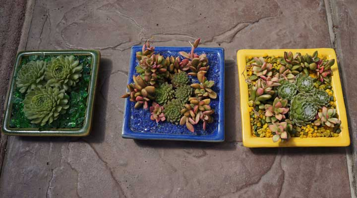 three colorful succulent container gardens