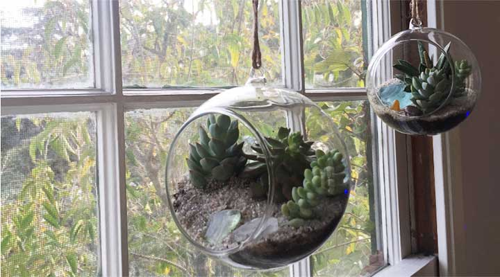 two terrariums hanging by windowsill
