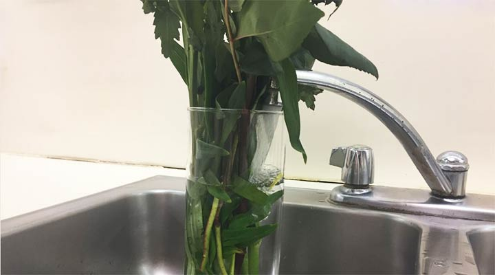 flower vase under faucet being refilled