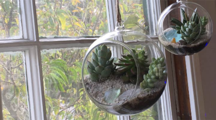 terrarium building tips