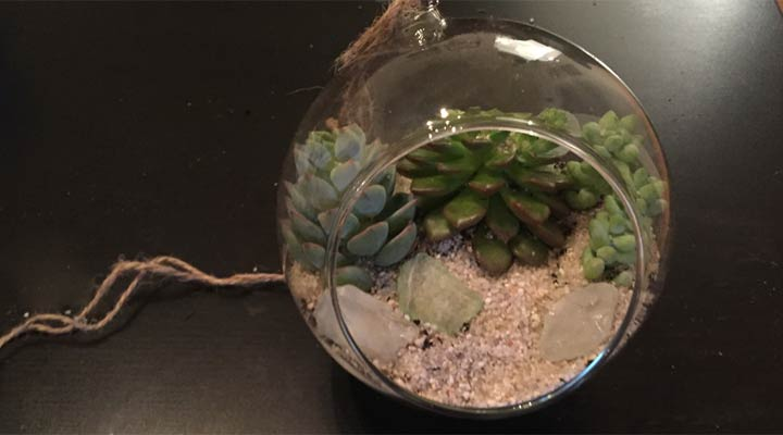 terrarium decorated with rocks