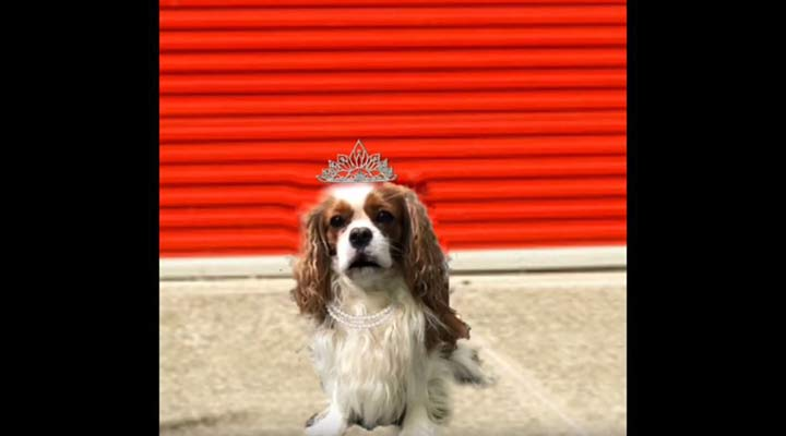 dog wearing crown poses in front of public storage orange doors